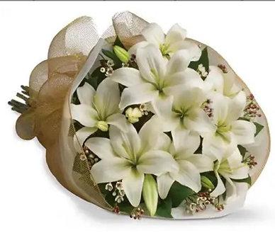 Lilium orientales