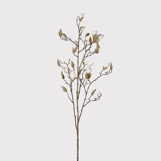 Luxury White Magnolia Tree Branch