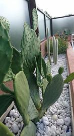 Jardin sec sur terrasse - Saint Raphaël