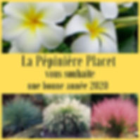 _Voeux 2020 Pépinière (1).jpg