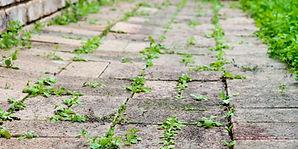 weeds-in-walkways.jpg