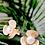 Thumbnail: Pearl Flower Stud Earrings