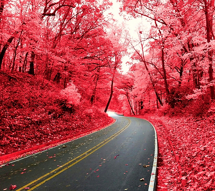 Red trees.png
