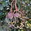 Thumbnail: Pink Amethyst Earrings