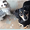 Thumbnail: Puppy Therapy with Alfie & Mj