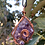 Thumbnail: Amethyst Statement Necklace