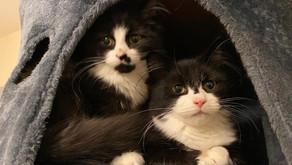 Max and Mini