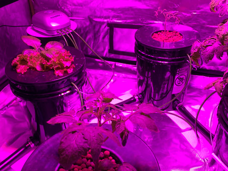 HYDROPONICS FOR FRESH WINTER VEGGIES