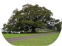 tree-11長方円.jpg