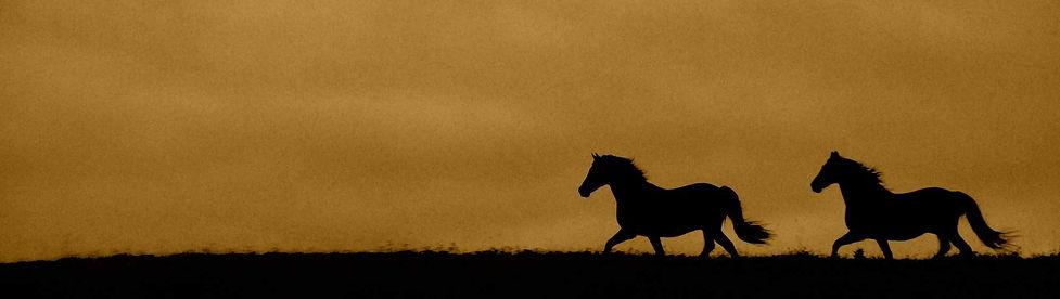 Horses-01b-e1495736899599.jpg