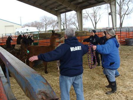 Wrangling llamas