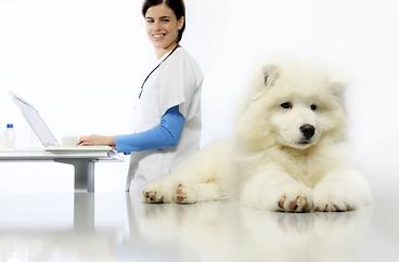 Laboratory Results Online Client Portal