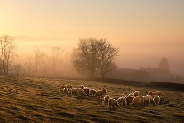 COLOUR: 'Winter Grazing' by Sam Campbell - Banbridge Camera Club