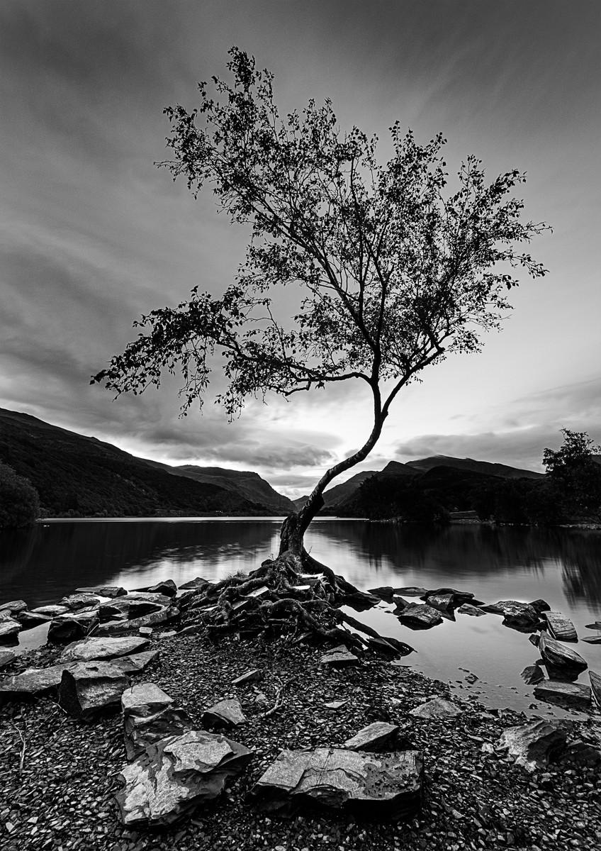 MONO - Llanberis Tree by Derek Geddis (10 marks)