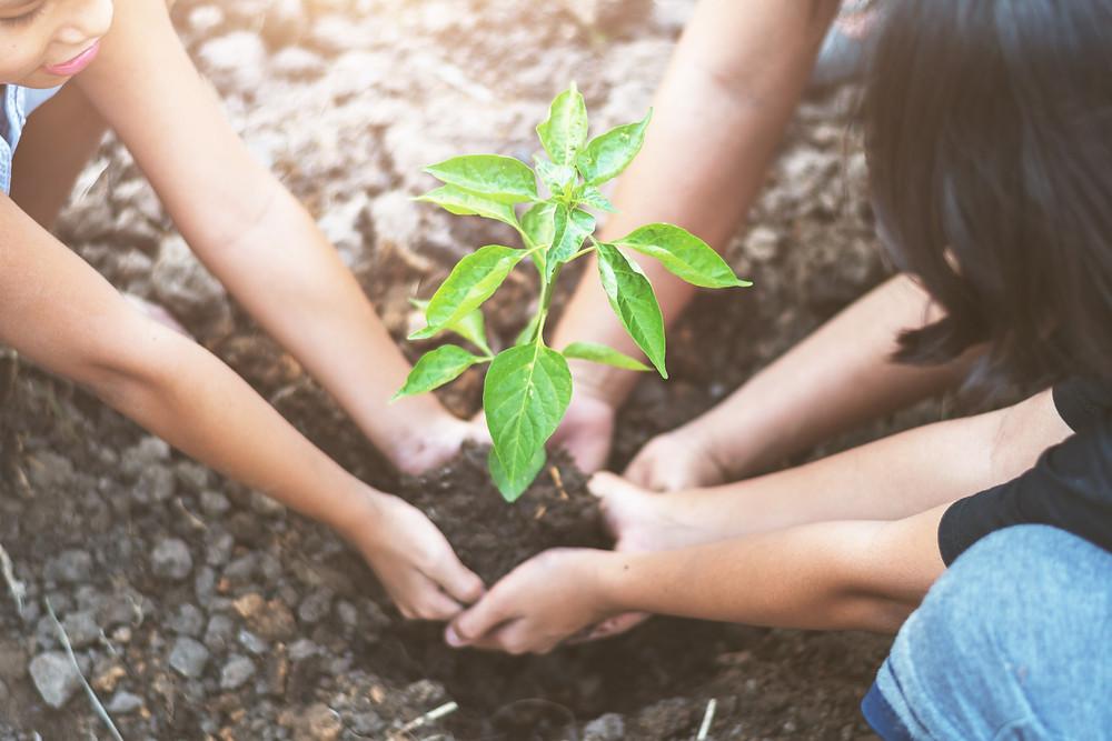 Plantando árvore