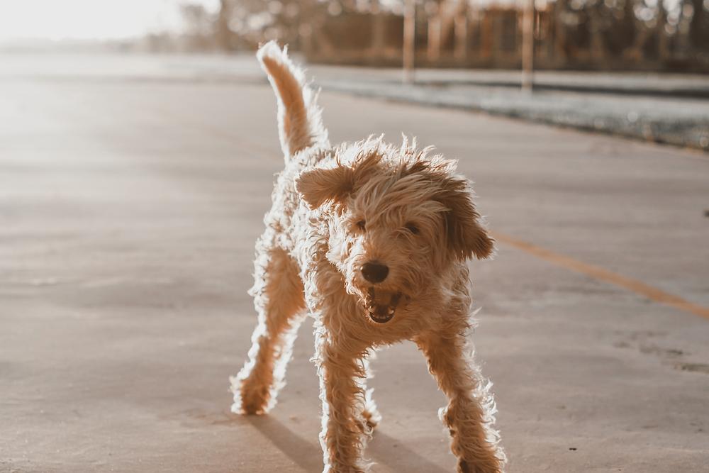 Hund auf einer Straße im Sonnenlicht.