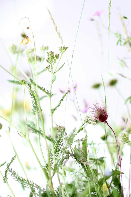 Foto einer Wildkräuterwiese.