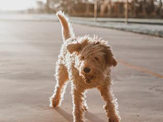 YOGA: Warum der Hund herab schaut!
