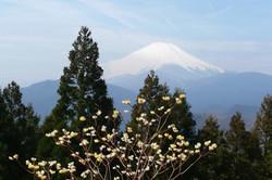P1060184ミツバ岳から富士山
