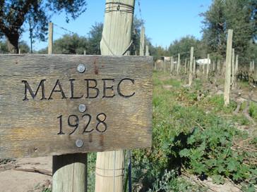 Etape 2 : La route des vins Argentins, Cafayate & Mendoza