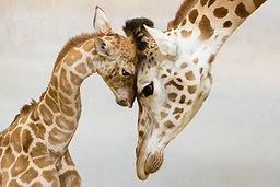 הקשבה,גובה העינים, קרבה בין הורה לילד