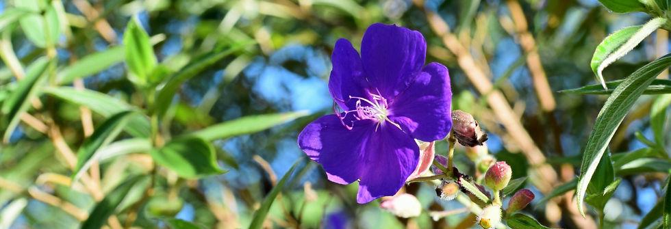 purple%2520fl%25202_edited_edited.jpg