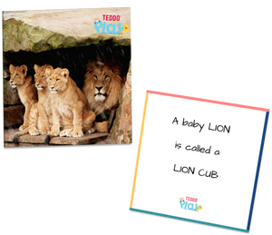 Lion with his cubs