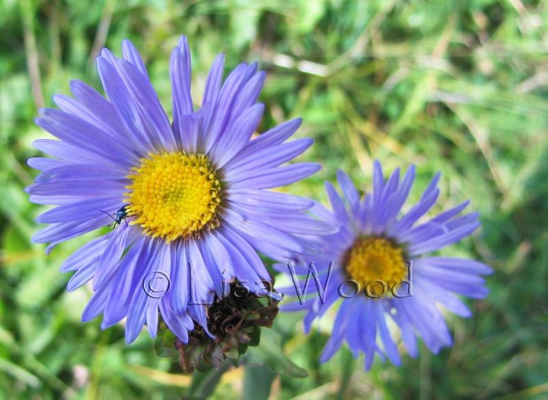Flowers 3 (2) (800x584) (800x584).jpg