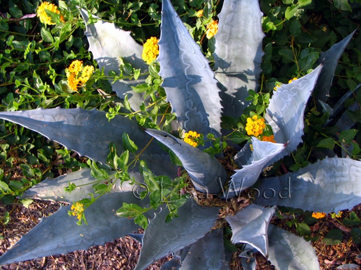 Cactus 009 (800x600) (800x600).jpg