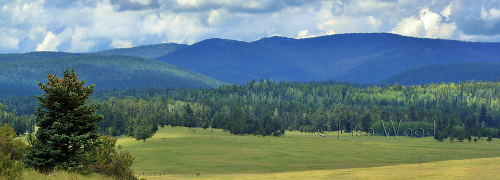 High Green Meadow web.jpg