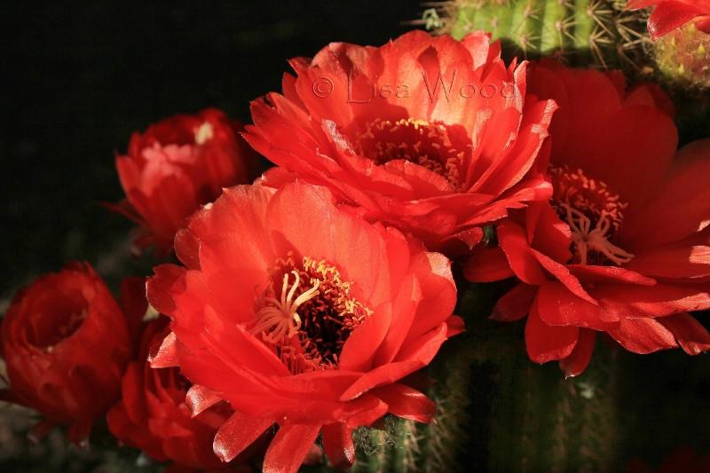 Flowers & Plants (13) (800x533) (800x533