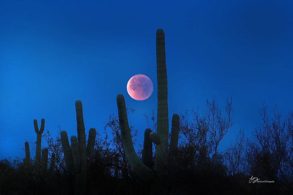 Scenery Moon lisa wood photography.jpg