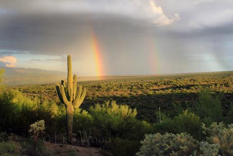 Rainbow in the Desert Valley