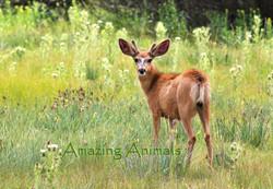 Amazing Animals Lisa Wood