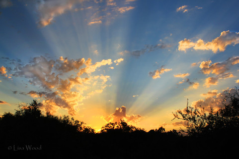 Rays at Sunrise
