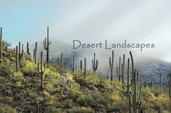 Desert Lanscapes Lisa Wood