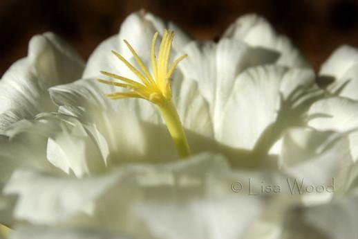 Flowers 9 (1) (800x533) (800x533).jpg