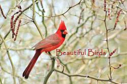 Beautiful Birds Lisa Wood
