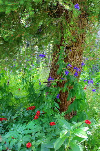 Deep Forest Color web.jpg