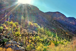 Scripture Photographs Lisa Wood
