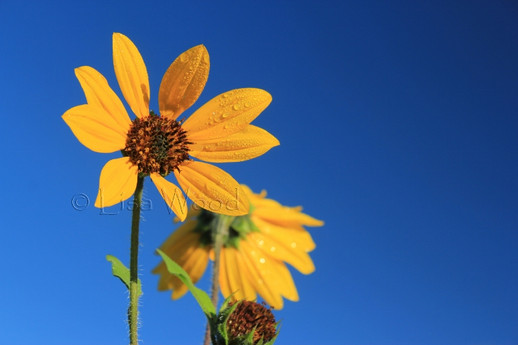 Flowers 8 (800x533) (800x533).jpg