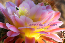Fantastic Flowers and Plants