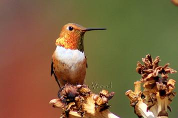 Birds (10cr).jpg