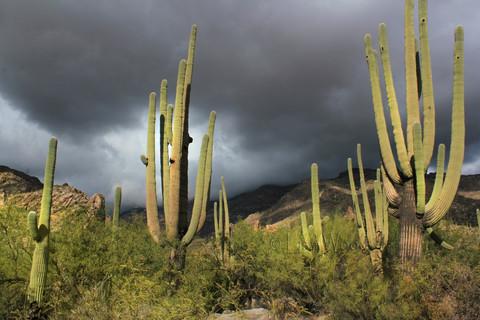 Ominous Desert Storm