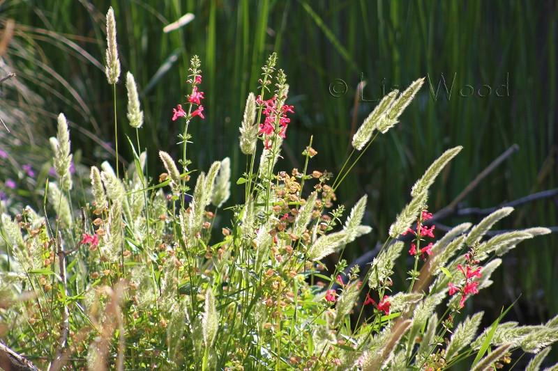 Flowers & Plants (12) (800x533) (800x533