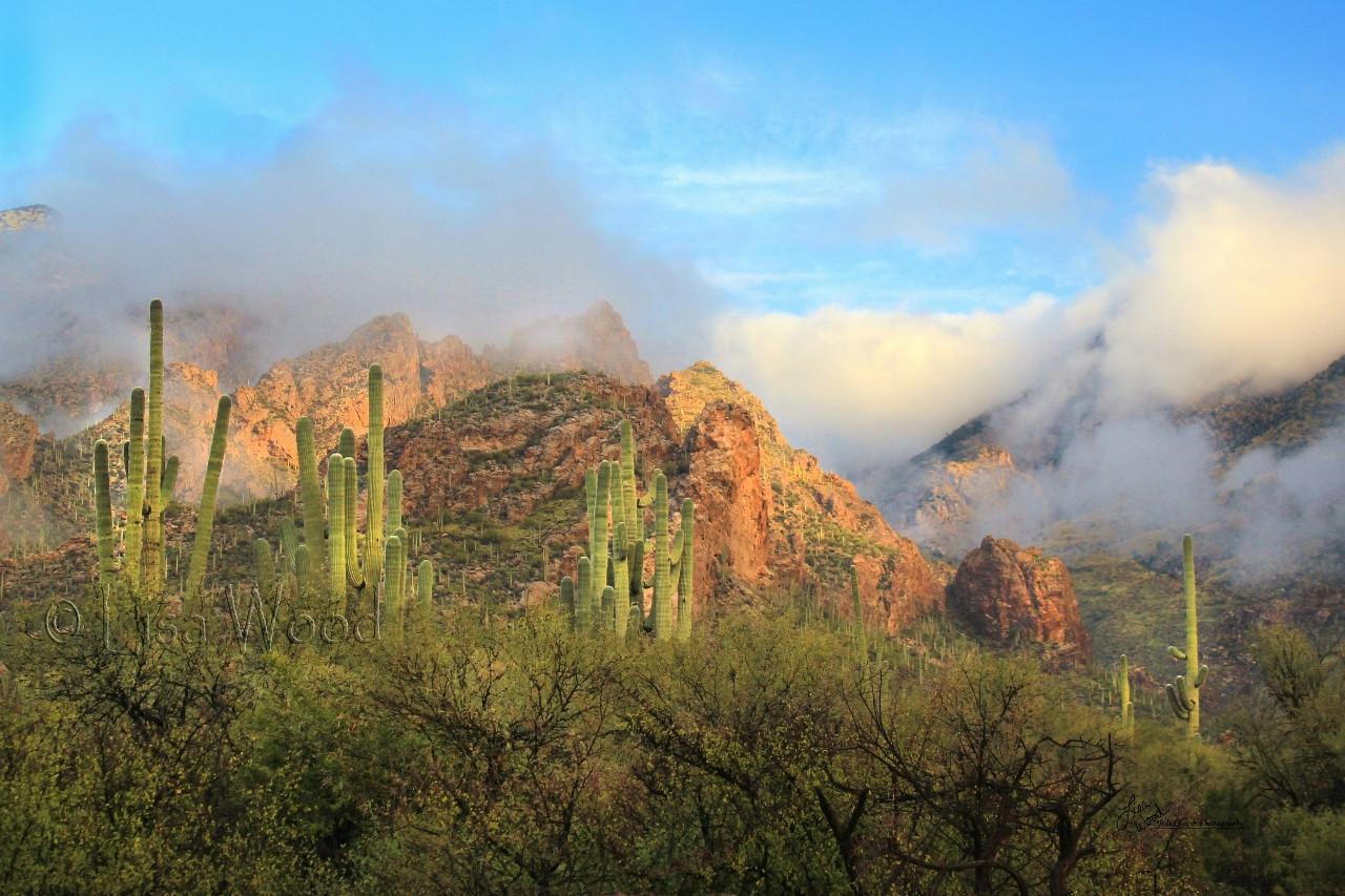 Misty Desert Morning
