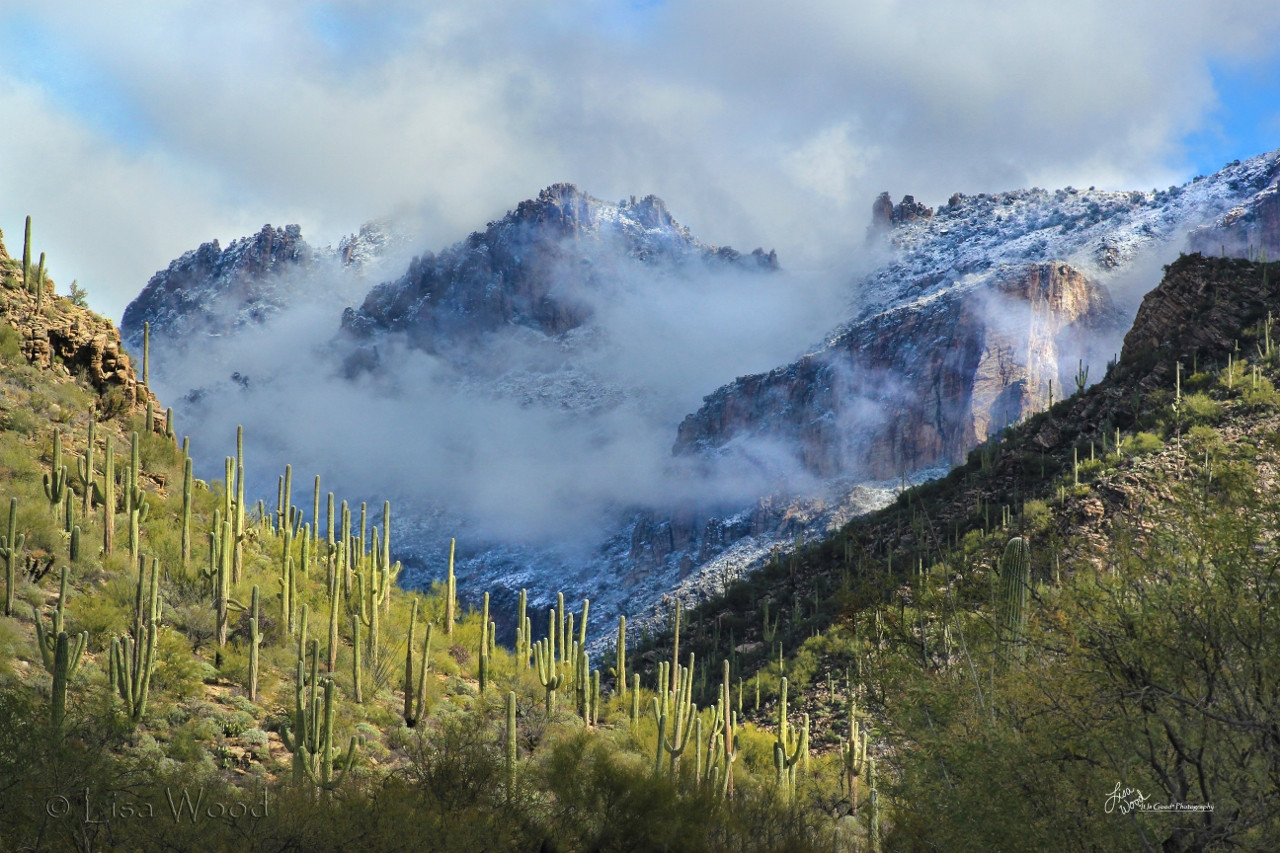 Sabino Canyon Grandeur