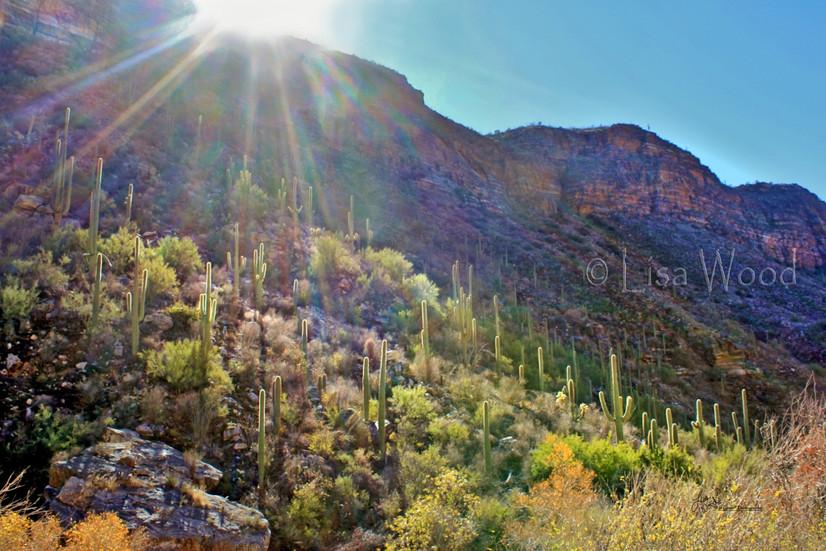 Sabino Canyon Cliff Sunrise