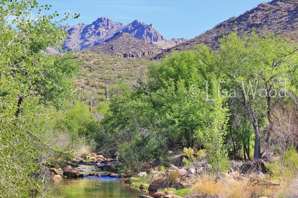 Sabino Canyon Springtime