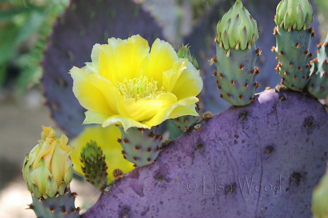 Flowers & Plants (14) cr (1280x853) (128